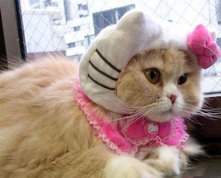 disfraz hello kitty gatita