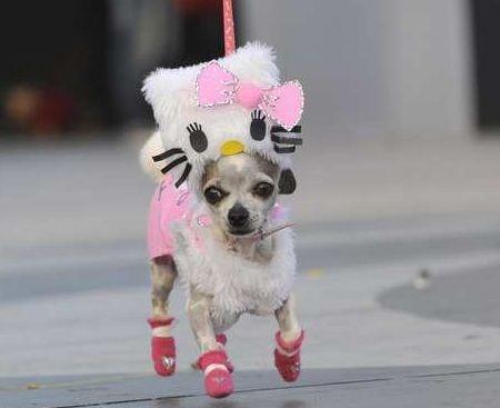 disfraz hello kitty chihuahua