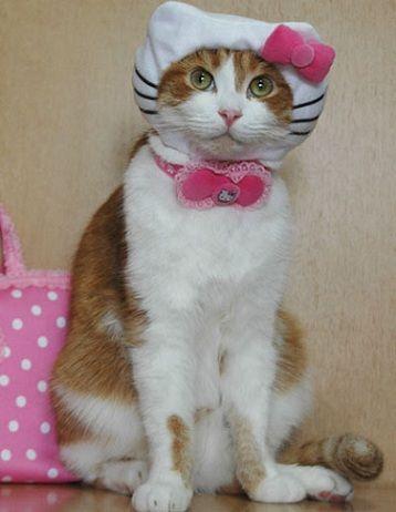 disfraz hello kitty gato