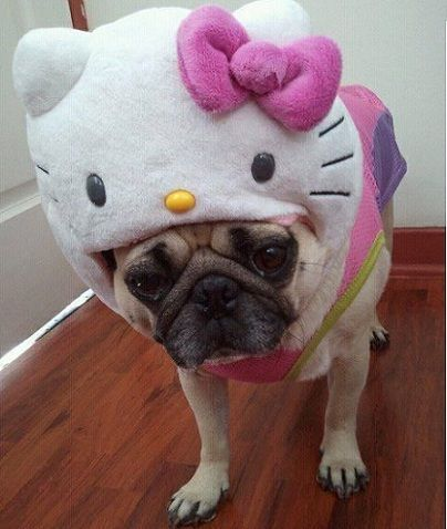 disfraz hello kitty perro