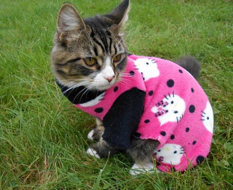 Hello Kitty para mascotas